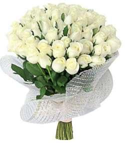 40 Rosas Brancas