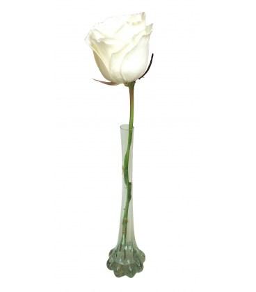Solitário Rosa Branca