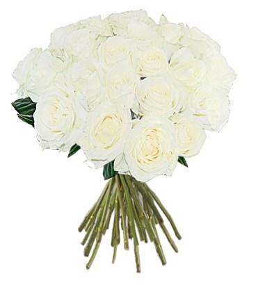 Rosas Brancas
