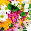 Conheça mais sobre as Flores do Campo
