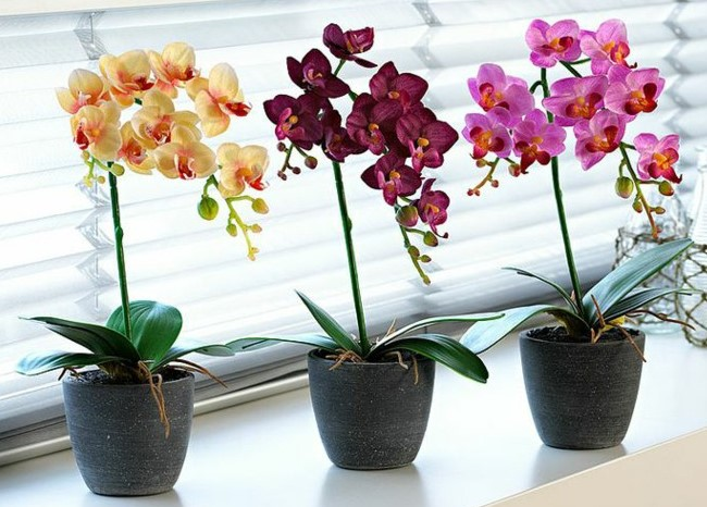 Orquideas coloridas