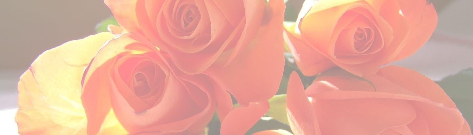 Mel Flores - Rosas Coral